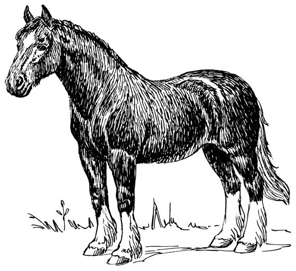 Barn horse level conversion