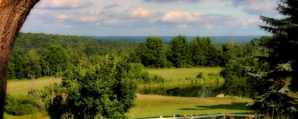 pond-lush-view-1280